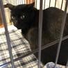 ビビリなハンサム黒猫のクロちゃんのこと サムネイル7