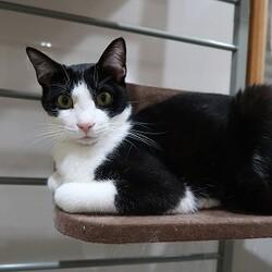 中止にします→猫の譲渡会in長崎市 浜町アーケード好文堂さん