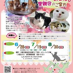 『保護猫のずっとのお家探し里親会』