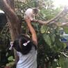 生後2ヶ月⭐️白玉ちゃんの家族を募集します。 サムネイル4
