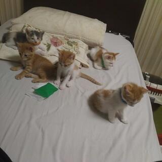 子ネコの里親募集です。とっても可愛い4匹です