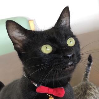 ひとが大好きな甘えん坊の黒猫☆ひじきちゃん