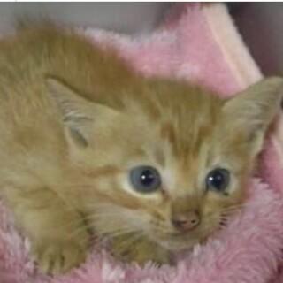 里親様に迎えられました。子猫 079