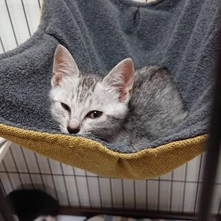2ヶ月ほどのカワイイ子猫♡