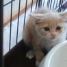 泣き顔の子猫 生後3ヶ月くらい 7月1日に保護