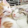 特別開催・子猫だけ14匹まつり/愛知県みよし市