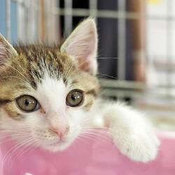 特別開催・子猫だけ19匹まつり/愛知県みよし市 サムネイル3
