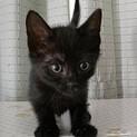 ゴロスリとっても可愛い黒猫女子★ルビ