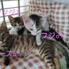 仔猫3兄弟★ツヅジちゃん サムネイル3