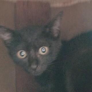 可愛いが止まらない♡黒猫のめるちゃん♡