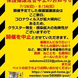【開催中止】 ハレノテラス保護猫譲渡会