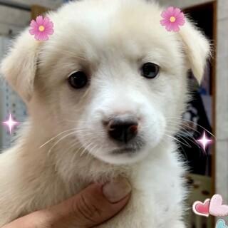 20-W456 可愛い仔犬ちゃん