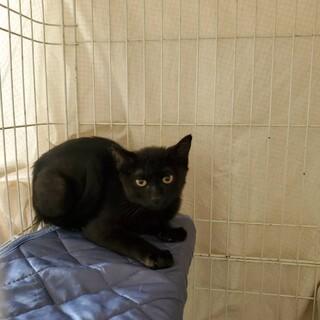 きけんな地域から救われたラッキーな黒猫くん♡