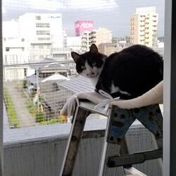 ネコは猫らしく