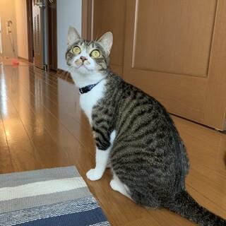 可愛い猫の新しい家族を探しています。