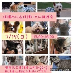 7/19堺市里親会詳細