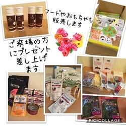 「7/19堺市里親会詳細」サムネイル2