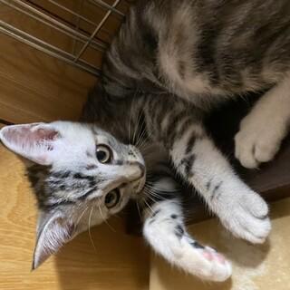 生後約2ヶ月半の子猫
