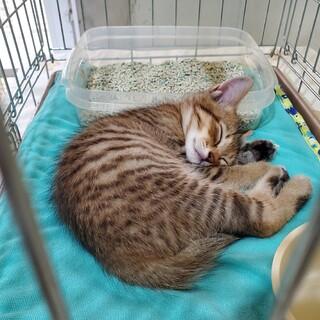 天使の寝顔の小さな子猫