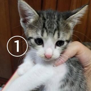 生後約1ヶ月の仔猫達