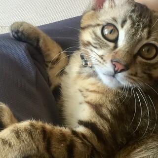 とても人なつこいイケメン子猫です