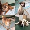 犬猫譲渡会&バザー