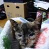 千葉市꙳★*゚保護子猫の里親さん募集꙳★*゚