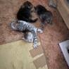 子猫が8匹も生まれてしまいました。
