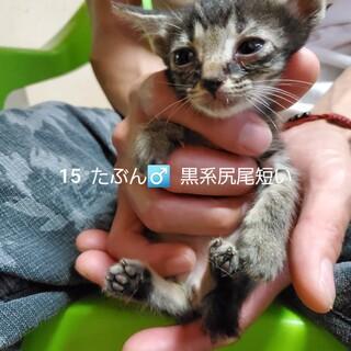 25匹 生後2ヶ月の子猫です③