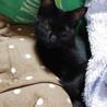 S26 片目が萎縮してしまっている黒猫君