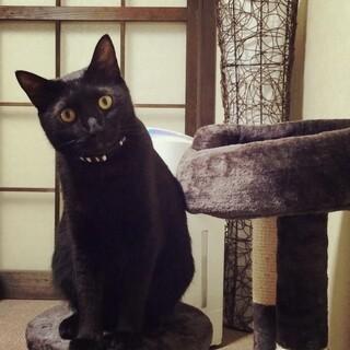 甘えん坊な黒猫ちゃん