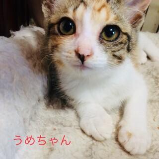 可愛い盛りの子猫!うめちゃん