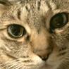 那須の猫ちゃん