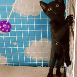 ◎寂しがりやの可愛い黒猫君!