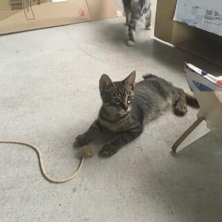 3か月過ぎの元気な子猫の里親募集!
