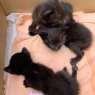 生後1カ月くらいの子猫3兄弟