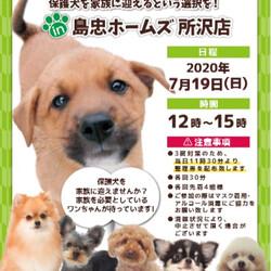 保護犬 譲渡会inホームズ所沢店