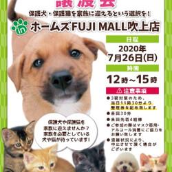 保護猫・保護犬 譲渡会inホームズFUJI MALL 吹上店