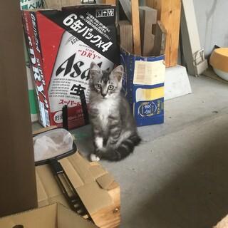 3か月過ぎの子猫の里親募集!