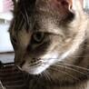 飼い主が半身不随になった可愛い猫たちに幸せを。