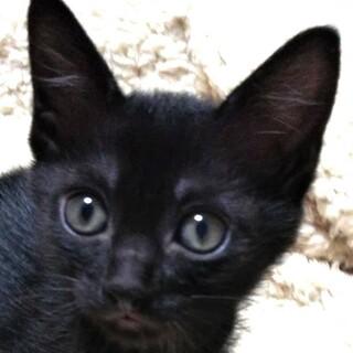 【結ーゆいー】猫じゃらし大好きな黒にゃんこ♪