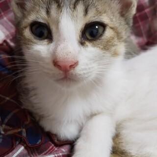 生後2ヶ月の子猫 ひで