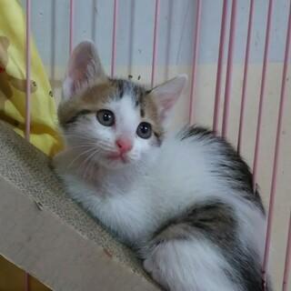 生後2ヶ月の子猫です