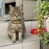 人が大好き!とても性格のいいオス猫です。
