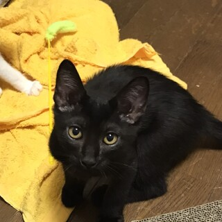 とてもシャイな黒猫ちゃん