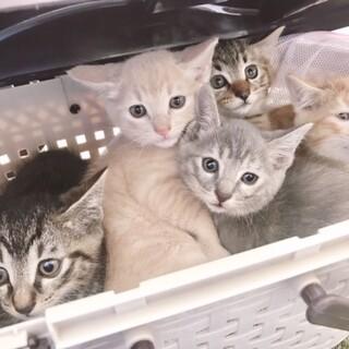 一人暮らしのおばあさんが飼育困難・子猫5匹