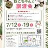 【7/12浅草橋】甘えん坊の肩乗りにゃんこ♡アスナ サムネイル6