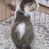 生後2ヶ月半〜3ヶ月の甘えた子猫ちゃん♪ サムネイル5