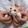 [ #大阪府 #豊中市 ] 茶トラ系子猫6匹兄妹。