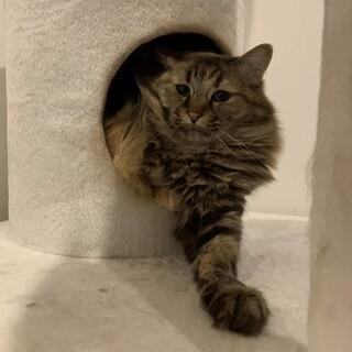 小柄な猫の親子
